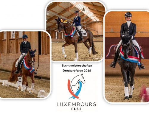 Zuchtmeisterschaften der Dressurpferde 2019